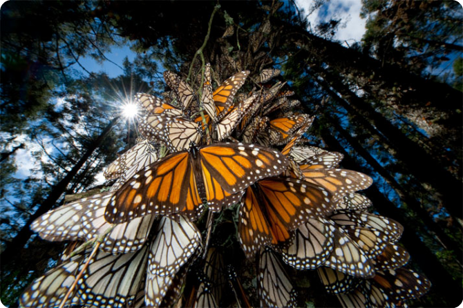 The-Worlds-Biggest-Butterfly-Sanctuary.jpg